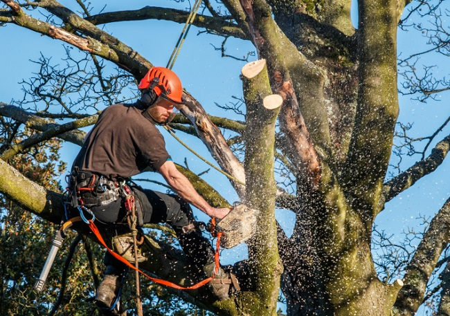 Aventura-South Florida Tree Trimming and Stump Grinding Services-We Offer Tree Trimming Services, Tree Removal, Tree Pruning, Tree Cutting, Residential and Commercial Tree Trimming Services, Storm Damage, Emergency Tree Removal, Land Clearing, Tree Companies, Tree Care Service, Stump Grinding, and we're the Best Tree Trimming Company Near You Guaranteed!