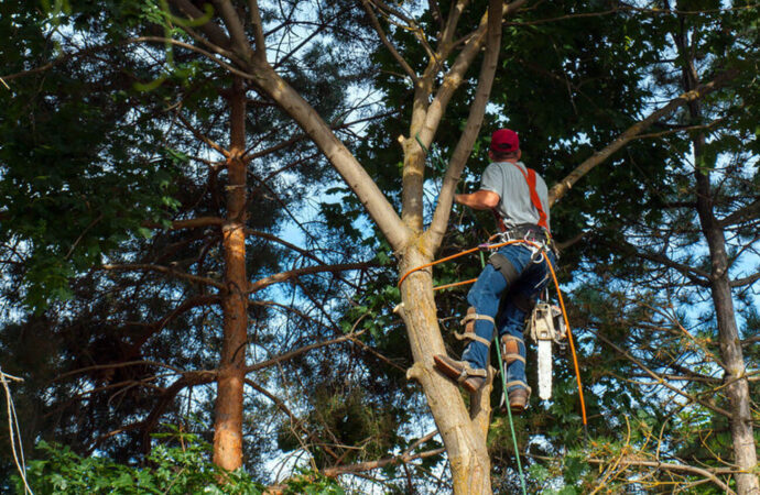 Boca Raton-South Florida Tree Trimming and Stump Grinding Services-We Offer Tree Trimming Services, Tree Removal, Tree Pruning, Tree Cutting, Residential and Commercial Tree Trimming Services, Storm Damage, Emergency Tree Removal, Land Clearing, Tree Companies, Tree Care Service, Stump Grinding, and we're the Best Tree Trimming Company Near You Guaranteed!