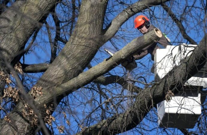 Cooper City-South Florida Tree Trimming and Stump Grinding Services-We Offer Tree Trimming Services, Tree Removal, Tree Pruning, Tree Cutting, Residential and Commercial Tree Trimming Services, Storm Damage, Emergency Tree Removal, Land Clearing, Tree Companies, Tree Care Service, Stump Grinding, and we're the Best Tree Trimming Company Near You Guaranteed!