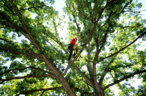 Coral Springs-South Florida Tree Trimming and Stump Grinding Services-We Offer Tree Trimming Services, Tree Removal, Tree Pruning, Tree Cutting, Residential and Commercial Tree Trimming Services, Storm Damage, Emergency Tree Removal, Land Clearing, Tree Companies, Tree Care Service, Stump Grinding, and we're the Best Tree Trimming Company Near You Guaranteed!