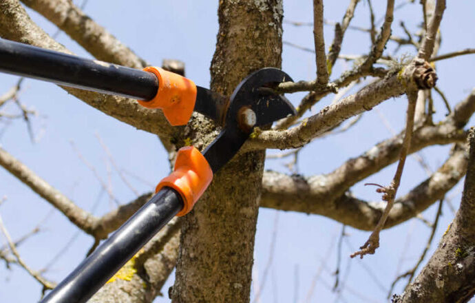 Cutler Bay-South Florida Tree Trimming and Stump Grinding Services-We Offer Tree Trimming Services, Tree Removal, Tree Pruning, Tree Cutting, Residential and Commercial Tree Trimming Services, Storm Damage, Emergency Tree Removal, Land Clearing, Tree Companies, Tree Care Service, Stump Grinding, and we're the Best Tree Trimming Company Near You Guaranteed!