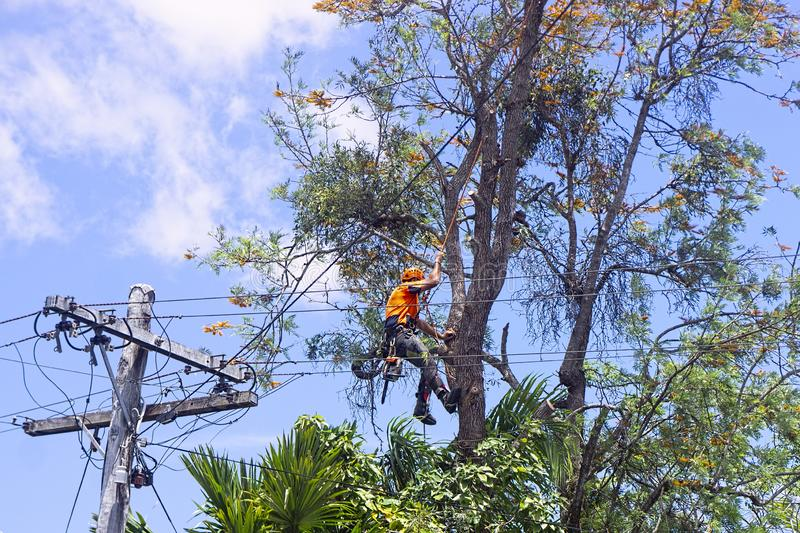 Dania Beach-South Florida Tree Trimming and Stump Grinding Services-We Offer Tree Trimming Services, Tree Removal, Tree Pruning, Tree Cutting, Residential and Commercial Tree Trimming Services, Storm Damage, Emergency Tree Removal, Land Clearing, Tree Companies, Tree Care Service, Stump Grinding, and we're the Best Tree Trimming Company Near You Guaranteed!