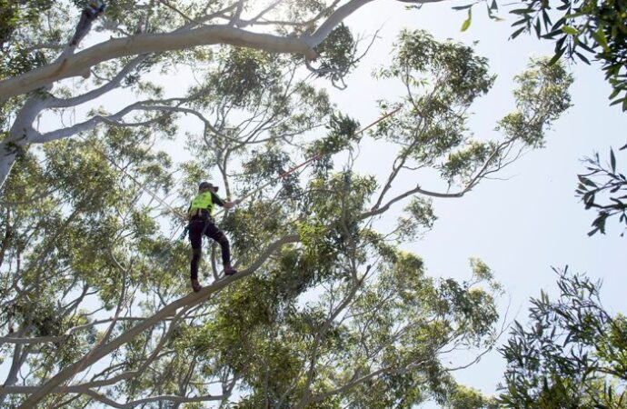Deerfield Beach-South Florida Tree Trimming and Stump Grinding Services-We Offer Tree Trimming Services, Tree Removal, Tree Pruning, Tree Cutting, Residential and Commercial Tree Trimming Services, Storm Damage, Emergency Tree Removal, Land Clearing, Tree Companies, Tree Care Service, Stump Grinding, and we're the Best Tree Trimming Company Near You Guaranteed!