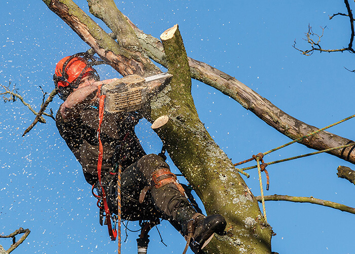 Doral-South Florida Tree Trimming and Stump Grinding Services-We Offer Tree Trimming Services, Tree Removal, Tree Pruning, Tree Cutting, Residential and Commercial Tree Trimming Services, Storm Damage, Emergency Tree Removal, Land Clearing, Tree Companies, Tree Care Service, Stump Grinding, and we're the Best Tree Trimming Company Near You Guaranteed!