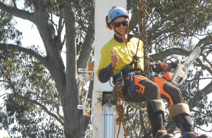Fontainebleau-South Florida Tree Trimming and Stump Grinding Services-We Offer Tree Trimming Services, Tree Removal, Tree Pruning, Tree Cutting, Residential and Commercial Tree Trimming Services, Storm Damage, Emergency Tree Removal, Land Clearing, Tree Companies, Tree Care Service, Stump Grinding, and we're the Best Tree Trimming Company Near You Guaranteed!
