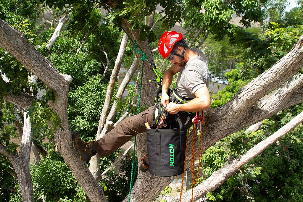 Golden Glades-South Florida Tree Trimming and Stump Grinding Services-We Offer Tree Trimming Services, Tree Removal, Tree Pruning, Tree Cutting, Residential and Commercial Tree Trimming Services, Storm Damage, Emergency Tree Removal, Land Clearing, Tree Companies, Tree Care Service, Stump Grinding, and we're the Best Tree Trimming Company Near You Guaranteed!