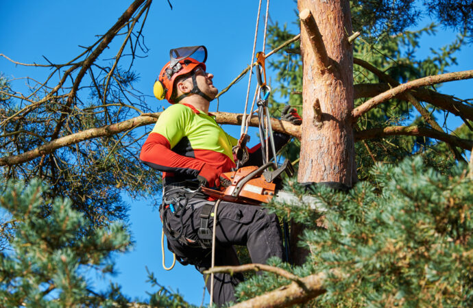 Hallandale Beach-South Florida Tree Trimming and Stump Grinding Services-We Offer Tree Trimming Services, Tree Removal, Tree Pruning, Tree Cutting, Residential and Commercial Tree Trimming Services, Storm Damage, Emergency Tree Removal, Land Clearing, Tree Companies, Tree Care Service, Stump Grinding, and we're the Best Tree Trimming Company Near You Guaranteed!