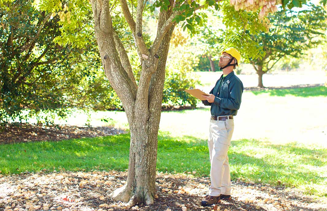 Hialeah-South Florida Tree Trimming and Stump Grinding Services-We Offer Tree Trimming Services, Tree Removal, Tree Pruning, Tree Cutting, Residential and Commercial Tree Trimming Services, Storm Damage, Emergency Tree Removal, Land Clearing, Tree Companies, Tree Care Service, Stump Grinding, and we're the Best Tree Trimming Company Near You Guaranteed!
