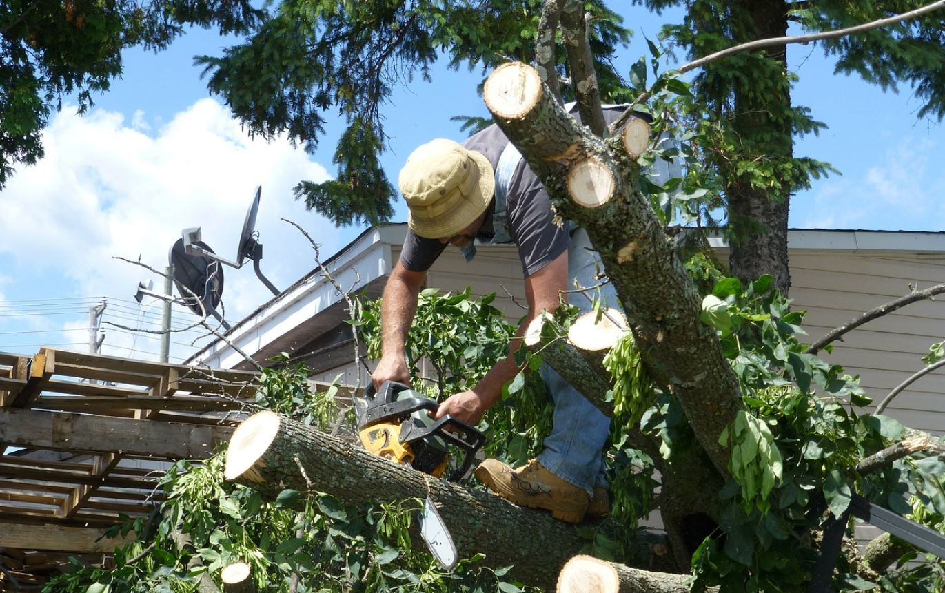Jupiter-South Florida Tree Trimming and Stump Grinding Services-We Offer Tree Trimming Services, Tree Removal, Tree Pruning, Tree Cutting, Residential and Commercial Tree Trimming Services, Storm Damage, Emergency Tree Removal, Land Clearing, Tree Companies, Tree Care Service, Stump Grinding, and we're the Best Tree Trimming Company Near You Guaranteed!