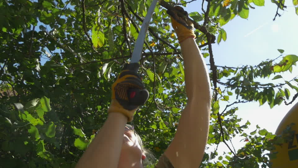 Key Biscayne-South Florida Tree Trimming and Stump Grinding Services-We Offer Tree Trimming Services, Tree Removal, Tree Pruning, Tree Cutting, Residential and Commercial Tree Trimming Services, Storm Damage, Emergency Tree Removal, Land Clearing, Tree Companies, Tree Care Service, Stump Grinding, and we're the Best Tree Trimming Company Near You Guaranteed!