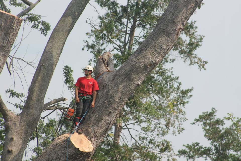 Lauderdale Lakes-South Florida Tree Trimming and Stump Grinding Services-We Offer Tree Trimming Services, Tree Removal, Tree Pruning, Tree Cutting, Residential and Commercial Tree Trimming Services, Storm Damage, Emergency Tree Removal, Land Clearing, Tree Companies, Tree Care Service, Stump Grinding, and we're the Best Tree Trimming Company Near You Guaranteed!