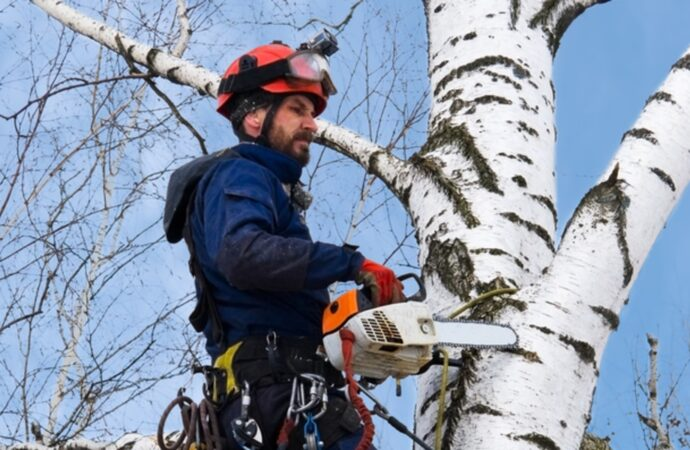 Miami Heights-South Florida Tree Trimming and Stump Grinding Services-We Offer Tree Trimming Services, Tree Removal, Tree Pruning, Tree Cutting, Residential and Commercial Tree Trimming Services, Storm Damage, Emergency Tree Removal, Land Clearing, Tree Companies, Tree Care Service, Stump Grinding, and we're the Best Tree Trimming Company Near You Guaranteed!