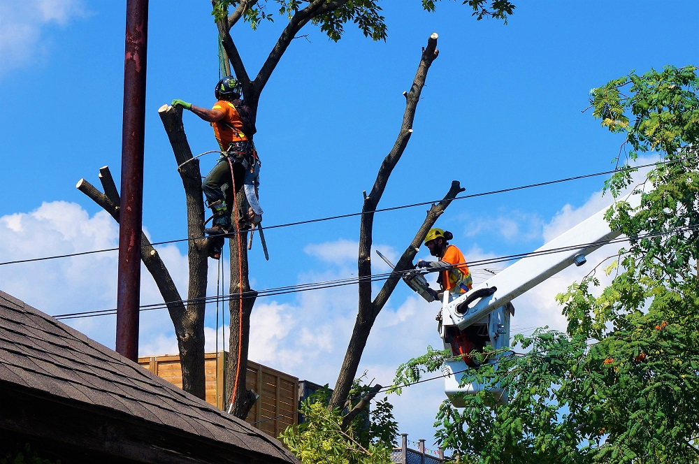 Miami Lakes-South Florida Tree Trimming and Stump Grinding Services-We Offer Tree Trimming Services, Tree Removal, Tree Pruning, Tree Cutting, Residential and Commercial Tree Trimming Services, Storm Damage, Emergency Tree Removal, Land Clearing, Tree Companies, Tree Care Service, Stump Grinding, and we're the Best Tree Trimming Company Near You Guaranteed!