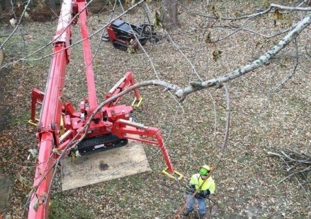 Miami-South Florida Tree Trimming and Stump Grinding Services-We Offer Tree Trimming Services, Tree Removal, Tree Pruning, Tree Cutting, Residential and Commercial Tree Trimming Services, Storm Damage, Emergency Tree Removal, Land Clearing, Tree Companies, Tree Care Service, Stump Grinding, and we're the Best Tree Trimming Company Near You Guaranteed!