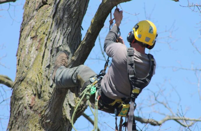 Miramar-South Florida Tree Trimming and Stump Grinding Services-We Offer Tree Trimming Services, Tree Removal, Tree Pruning, Tree Cutting, Residential and Commercial Tree Trimming Services, Storm Damage, Emergency Tree Removal, Land Clearing, Tree Companies, Tree Care Service, Stump Grinding, and we're the Best Tree Trimming Company Near You Guaranteed!