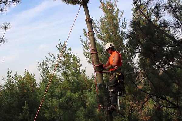 North Miami Beach-South Florida Tree Trimming and Stump Grinding Services-We Offer Tree Trimming Services, Tree Removal, Tree Pruning, Tree Cutting, Residential and Commercial Tree Trimming Services, Storm Damage, Emergency Tree Removal, Land Clearing, Tree Companies, Tree Care Service, Stump Grinding, and we're the Best Tree Trimming Company Near You Guaranteed!