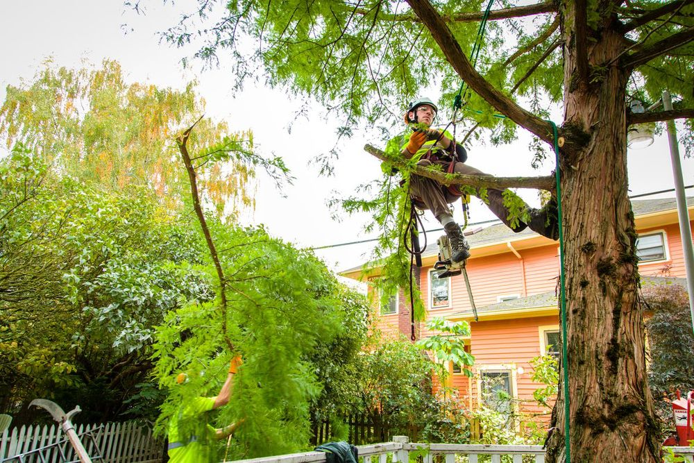 North Miami-South Florida Tree Trimming and Stump Grinding Services-We Offer Tree Trimming Services, Tree Removal, Tree Pruning, Tree Cutting, Residential and Commercial Tree Trimming Services, Storm Damage, Emergency Tree Removal, Land Clearing, Tree Companies, Tree Care Service, Stump Grinding, and we're the Best Tree Trimming Company Near You Guaranteed!