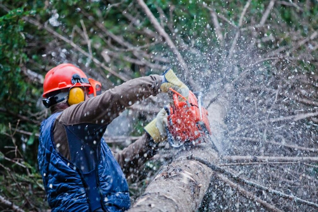 Palm Beach Gardens-South Florida Tree Trimming and Stump Grinding Services-We Offer Tree Trimming Services, Tree Removal, Tree Pruning, Tree Cutting, Residential and Commercial Tree Trimming Services, Storm Damage, Emergency Tree Removal, Land Clearing, Tree Companies, Tree Care Service, Stump Grinding, and we're the Best Tree Trimming Company Near You Guaranteed!