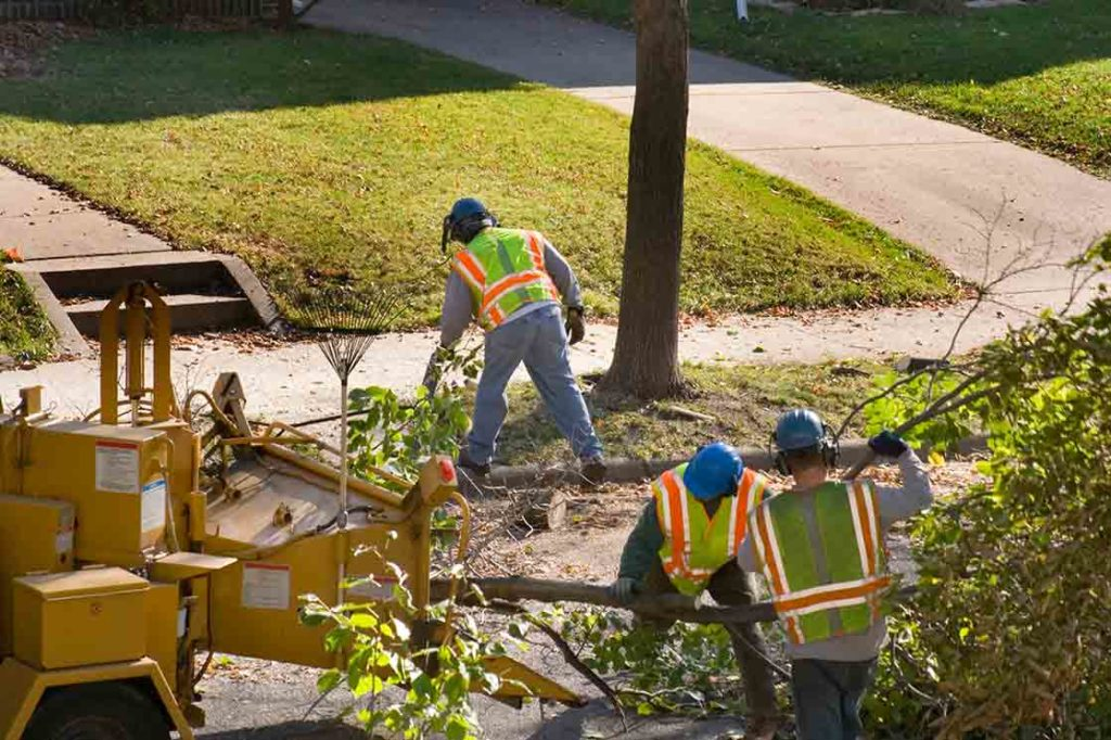 Palm Springs-South Florida Tree Trimming and Stump Grinding Services-We Offer Tree Trimming Services, Tree Removal, Tree Pruning, Tree Cutting, Residential and Commercial Tree Trimming Services, Storm Damage, Emergency Tree Removal, Land Clearing, Tree Companies, Tree Care Service, Stump Grinding, and we're the Best Tree Trimming Company Near You Guaranteed!