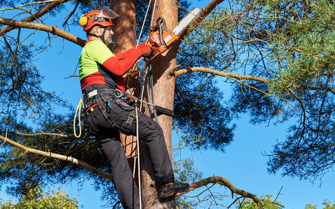 Palmetto Bay-South Florida Tree Trimming and Stump Grinding Services-We Offer Tree Trimming Services, Tree Removal, Tree Pruning, Tree Cutting, Residential and Commercial Tree Trimming Services, Storm Damage, Emergency Tree Removal, Land Clearing, Tree Companies, Tree Care Service, Stump Grinding, and we're the Best Tree Trimming Company Near You Guaranteed!
