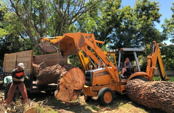 Pembroke Pines-South Florida Tree Trimming and Stump Grinding Services-We Offer Tree Trimming Services, Tree Removal, Tree Pruning, Tree Cutting, Residential and Commercial Tree Trimming Services, Storm Damage, Emergency Tree Removal, Land Clearing, Tree Companies, Tree Care Service, Stump Grinding, and we're the Best Tree Trimming Company Near You Guaranteed!