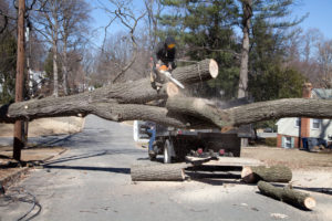 Residential Tree Services-South Florida Tree Trimming and Stump Grinding Services-We Offer Tree Trimming Services, Tree Removal, Tree Pruning, Tree Cutting, Residential and Commercial Tree Trimming Services, Storm Damage, Emergency Tree Removal, Land Clearing, Tree Companies, Tree Care Service, Stump Grinding, and we're the Best Tree Trimming Company Near You Guaranteed!