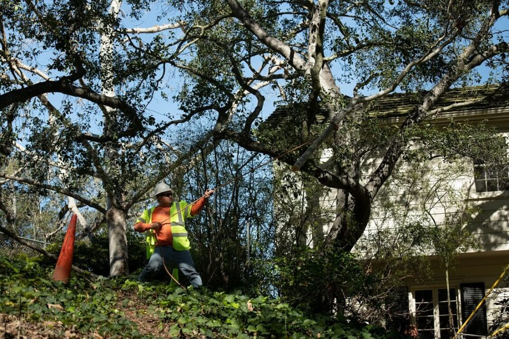Royal Palm Beach-South Florida Tree Trimming and Stump Grinding Services-We Offer Tree Trimming Services, Tree Removal, Tree Pruning, Tree Cutting, Residential and Commercial Tree Trimming Services, Storm Damage, Emergency Tree Removal, Land Clearing, Tree Companies, Tree Care Service, Stump Grinding, and we're the Best Tree Trimming Company Near You Guaranteed!