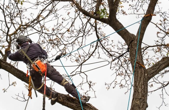 Southwest Ranches-South Florida Tree Trimming and Stump Grinding Services-We Offer Tree Trimming Services, Tree Removal, Tree Pruning, Tree Cutting, Residential and Commercial Tree Trimming Services, Storm Damage, Emergency Tree Removal, Land Clearing, Tree Companies, Tree Care Service, Stump Grinding, and we're the Best Tree Trimming Company Near You Guaranteed!