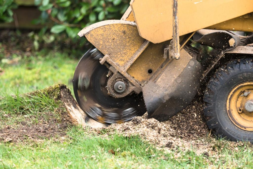 Stump Grinding-South Florida Tree Trimming and Stump Grinding Services-We Offer Tree Trimming Services, Tree Removal, Tree Pruning, Tree Cutting, Residential and Commercial Tree Trimming Services, Storm Damage, Emergency Tree Removal, Land Clearing, Tree Companies, Tree Care Service, Stump Grinding, and we're the Best Tree Trimming Company Near You Guaranteed!