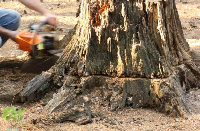 Stump Removal-South Florida Tree Trimming and Stump Grinding Services-We Offer Tree Trimming Services, Tree Removal, Tree Pruning, Tree Cutting, Residential and Commercial Tree Trimming Services, Storm Damage, Emergency Tree Removal, Land Clearing, Tree Companies, Tree Care Service, Stump Grinding, and we're the Best Tree Trimming Company Near You Guaranteed!
