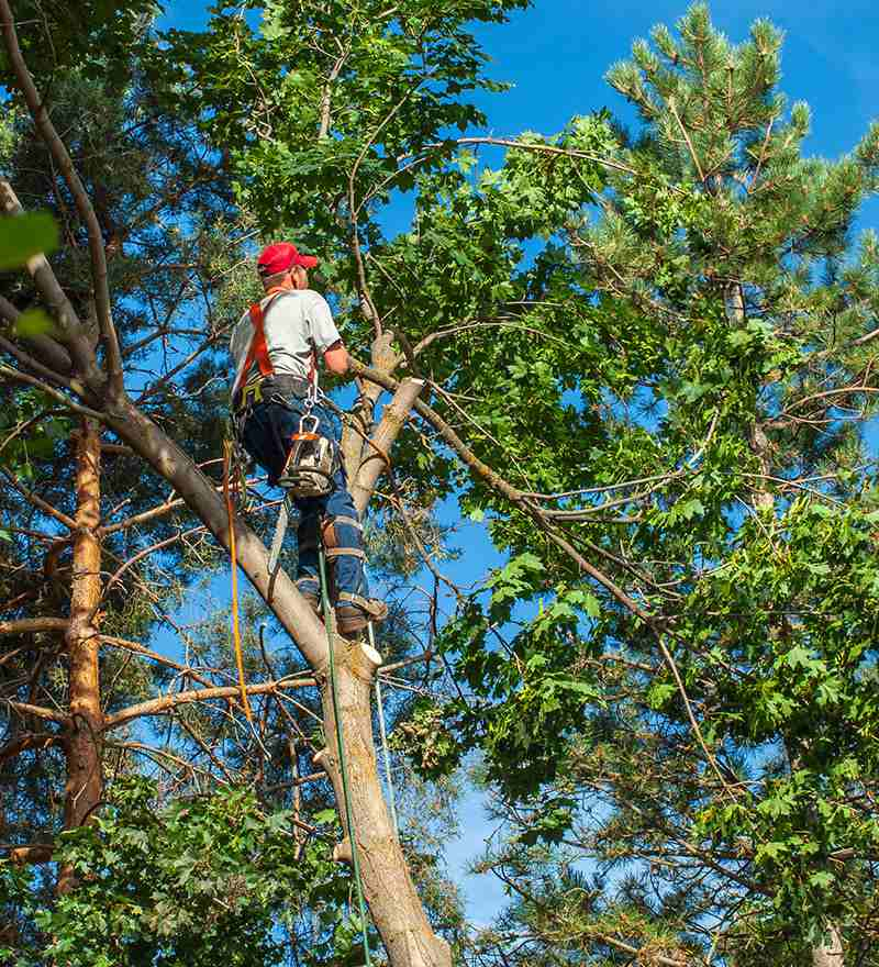 Tamarac-South-Florida-Tree-Trimming-and-Stump-Grinding-Services-We Offer Tree Trimming Services, Tree Removal, Tree Pruning, Tree Cutting, Residential and Commercial Tree Trimming Services, Storm Damage, Emergency Tree Removal, Land Clearing, Tree Companies, Tree Care Service, Stump Grinding, and we're the Best Tree Trimming Company Near You Guaranteed!