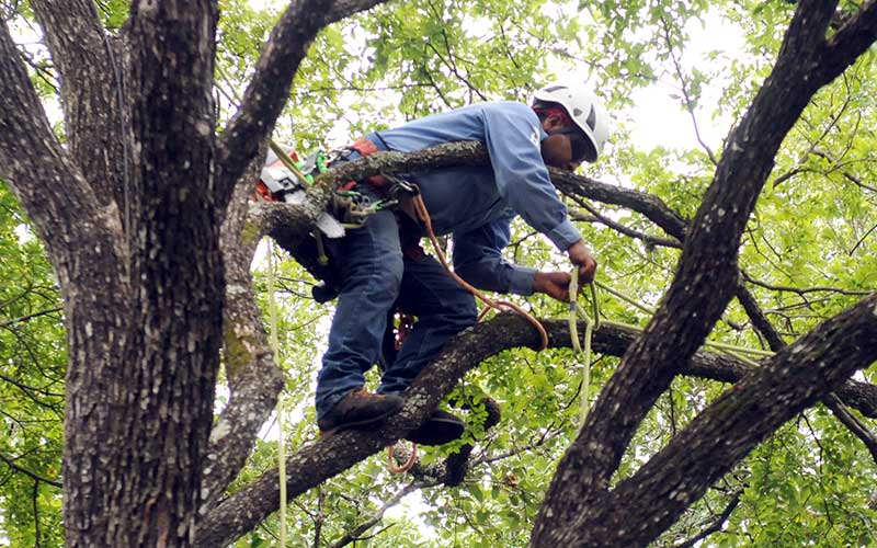 Tamiami-South Florida Tree Trimming and Stump Grinding Services-We Offer Tree Trimming Services, Tree Removal, Tree Pruning, Tree Cutting, Residential and Commercial Tree Trimming Services, Storm Damage, Emergency Tree Removal, Land Clearing, Tree Companies, Tree Care Service, Stump Grinding, and we're the Best Tree Trimming Company Near You Guaranteed!