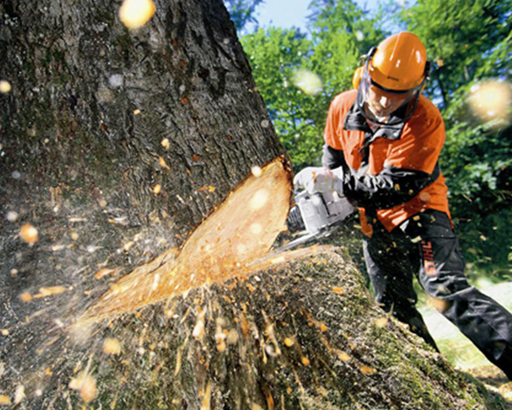 Tree Cutting-South Florida Tree Trimming and Stump Grinding Services-We Offer Tree Trimming Services, Tree Removal, Tree Pruning, Tree Cutting, Residential and Commercial Tree Trimming Services, Storm Damage, Emergency Tree Removal, Land Clearing, Tree Companies, Tree Care Service, Stump Grinding, and we're the Best Tree Trimming Company Near You Guaranteed!