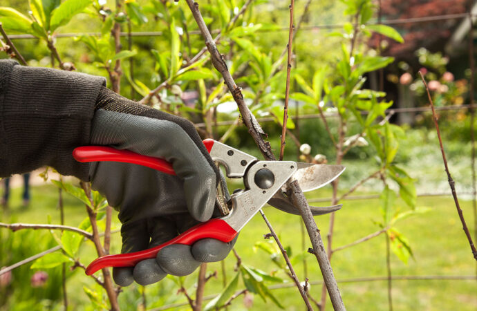 Tree Pruning-South Florida Tree Trimming and Stump Grinding Services-We Offer Tree Trimming Services, Tree Removal, Tree Pruning, Tree Cutting, Residential and Commercial Tree Trimming Services, Storm Damage, Emergency Tree Removal, Land Clearing, Tree Companies, Tree Care Service, Stump Grinding, and we're the Best Tree Trimming Company Near You Guaranteed!