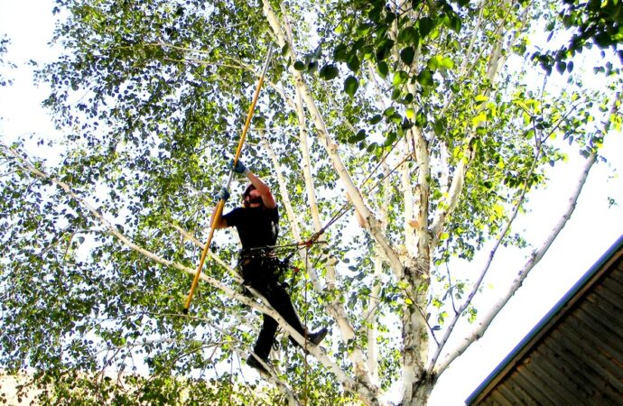 West Miami-South Florida Tree Trimming and Stump Grinding Services-We Offer Tree Trimming Services, Tree Removal, Tree Pruning, Tree Cutting, Residential and Commercial Tree Trimming Services, Storm Damage, Emergency Tree Removal, Land Clearing, Tree Companies, Tree Care Service, Stump Grinding, and we're the Best Tree Trimming Company Near You Guaranteed!