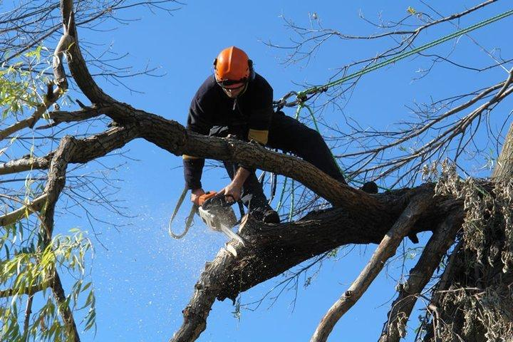 Weston-South Florida Tree Trimming and Stump Grinding Services-We Offer Tree Trimming Services, Tree Removal, Tree Pruning, Tree Cutting, Residential and Commercial Tree Trimming Services, Storm Damage, Emergency Tree Removal, Land Clearing, Tree Companies, Tree Care Service, Stump Grinding, and we're the Best Tree Trimming Company Near You Guaranteed!